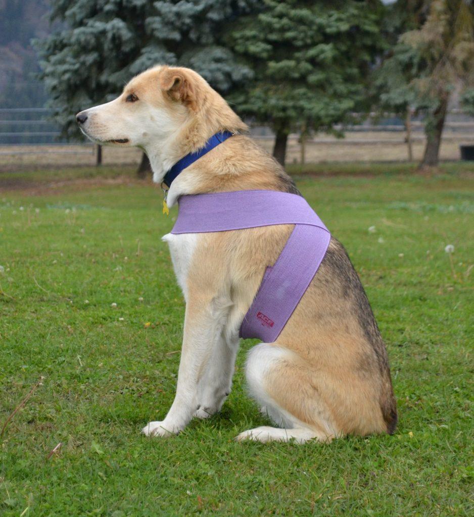TTouch Quarter bodywrap for dogs