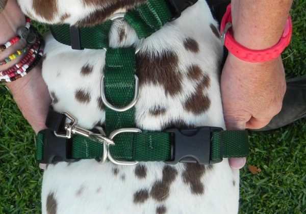 Fitting the TTouch Harmony dog harness