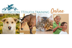 Tellington TTouch learning online