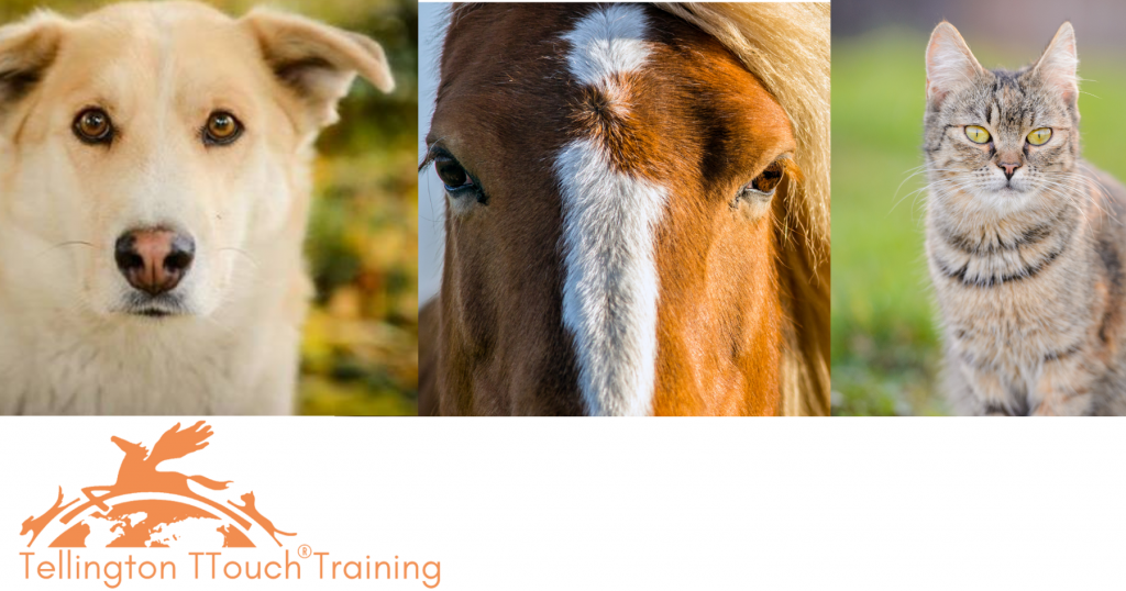 Tellington TTouch method for dogs, cats and horses