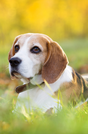 Intro Dog Courses