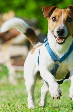 Level 1 Dog Courses