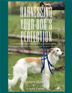 Loose Leash Walking for Your Dog