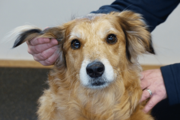 Ear TTouch for Dogs