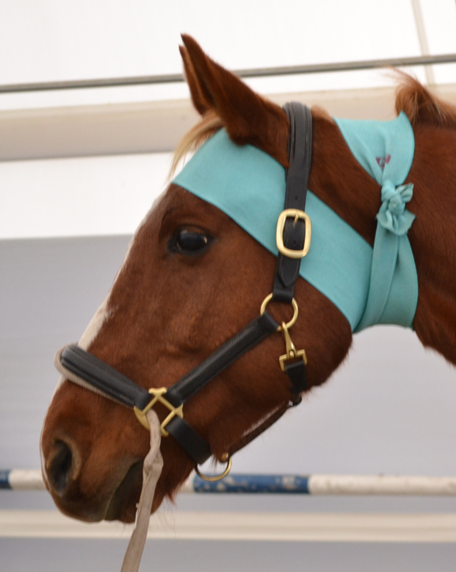 Tellington TTouch Body Wrap for horses