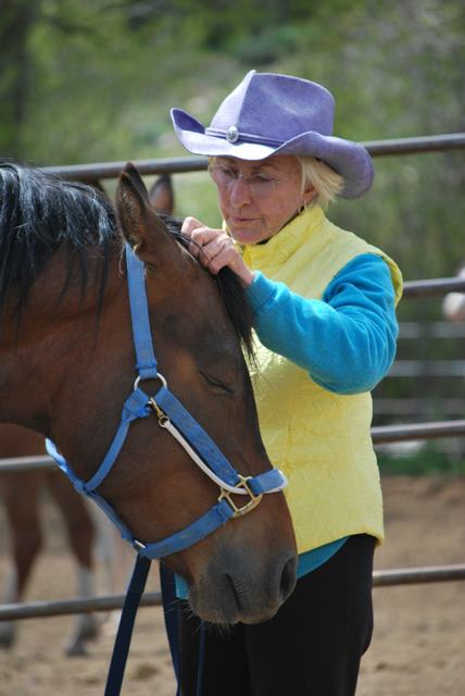 Linda Tellington-jones gives a horse ttouch