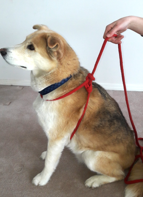 TTouch rope dog harness