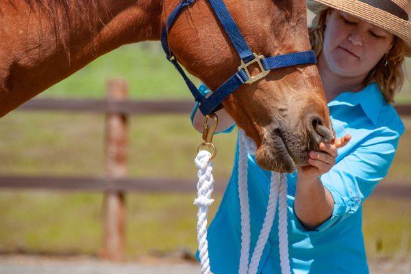 KAthleen Aspenns teaching Tellington TTOuch Method Mouthwork on a horse