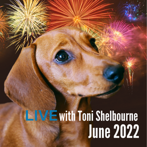 Toni Shelbourne helps dogs cope with loud noises and fireworks