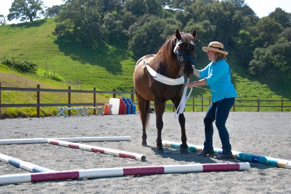 Tellington TTOuch Labyrinth with a horse and KAthleen Aspenns