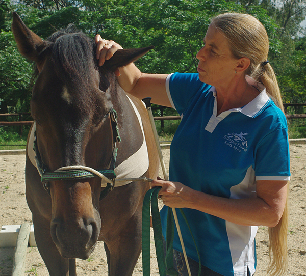 Tail TTouch on a horse with Lindy Dekker