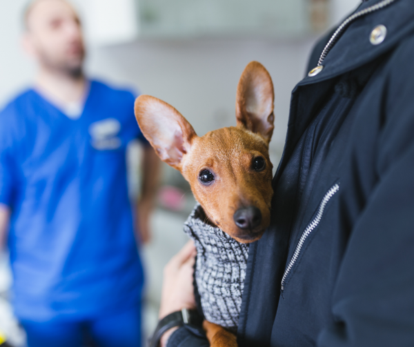 TTouch to help dogs who are fearful at the vet