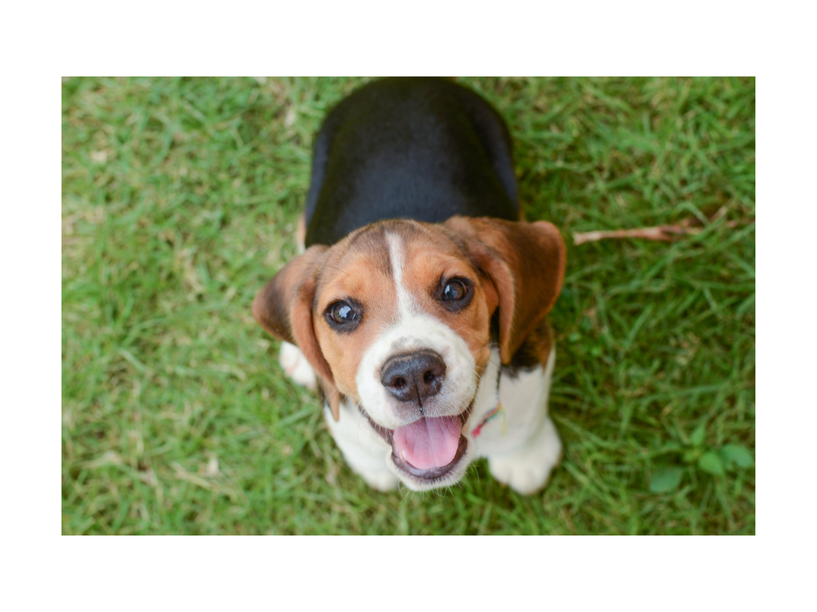 Use ttouch to develop a happy healthy puppy