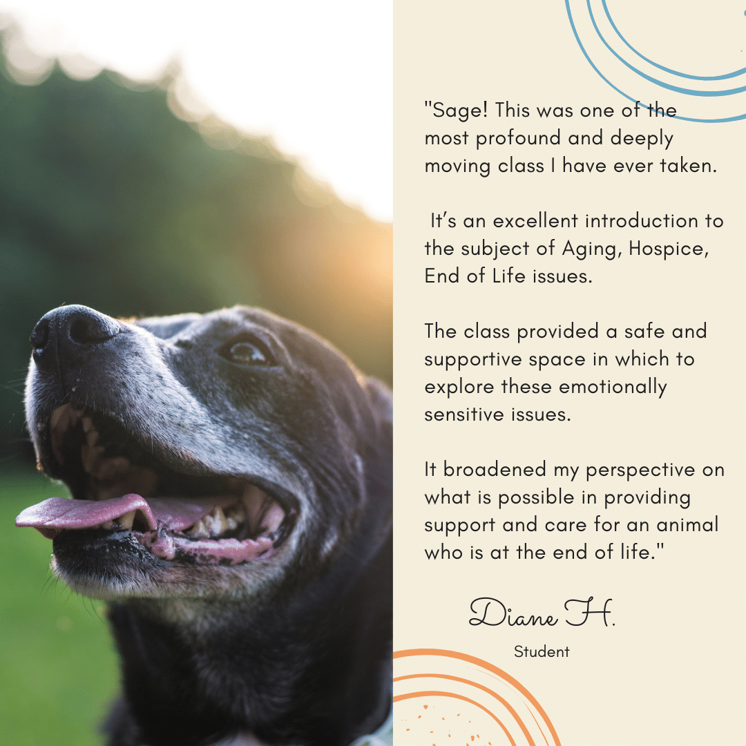Support your senior or aging dog with TTouch