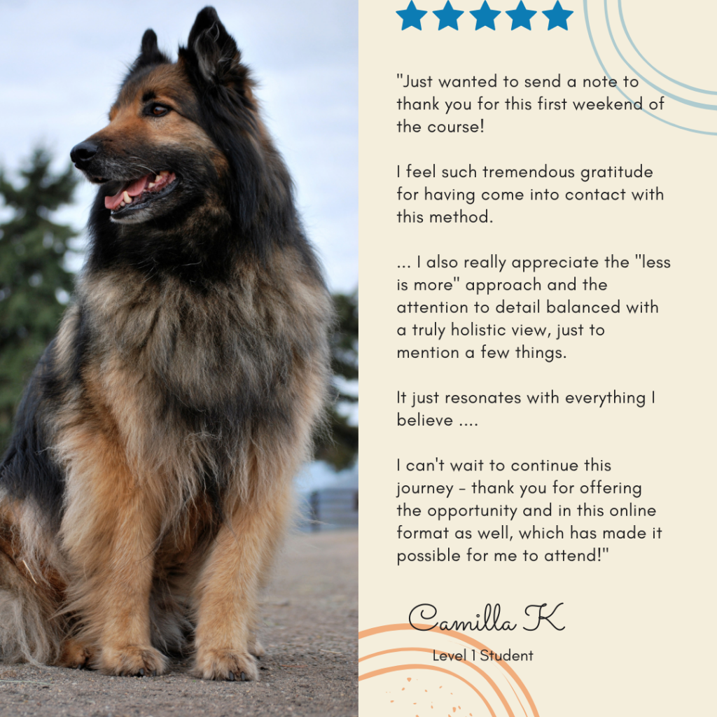 Students love learning TTouch for dogs online